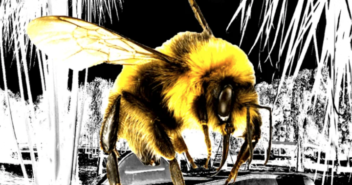 """A-Milli announce their debut single """"Bumble Bee""""."""